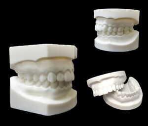 Dental Study Teaching Teeth Model Caries Tooth Care Analysis Tooth Models 28 32
