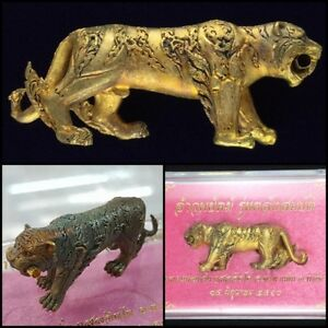 Tiger Carry Gold Takrut Pink Lp Wan Thai Amulet Hunting Talisman Lucky Wealth