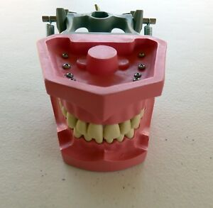 Columbia Dentoform Ms 860 Articulated Hard Gingiva Model 28 Ivorine Teeth