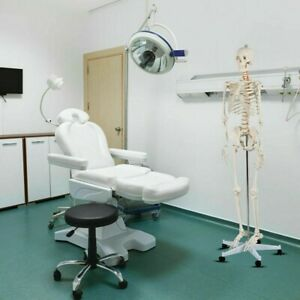 Medical School Human Anatomy Class Life size Skeleton Model Medicine Teach Tools