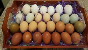 Fertile Hatching Eggs Mix And Match 12 Plus All Pure Breeds