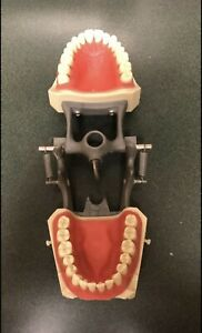 Dental Lot Columbia Dentoform Corp Typodont Tooth Model With Removable Teeth