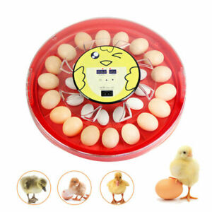 Household Chicken Goose Egg Incubator Fully Automatic 110v Temp humidity Control