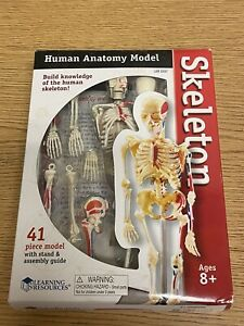 Learning Resource Model Skeleton Human Anatomy Medical With Stand Teaching