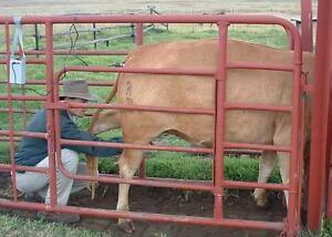 Animal livestock Immobilizer The New Way To Work On Animals With Ease