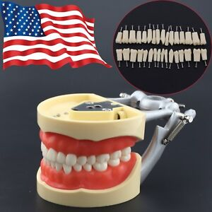 Usa Dental Typodont Model Practice Simulation Kilgore Nissin 200 Replace Teeth