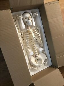 Life Size Human Skeleton Medical Model W Stand New