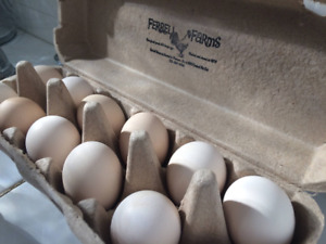 Fertile Frizzle Bantam Fun And Funky Chicken Eggs 12 Free Shipping
