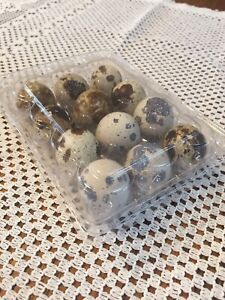 Quail Egg Cartons Holds 12 Eggs 100 Pack Snap Close Plastic