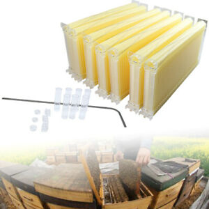 7pcs Beekeeping Hive Frame Honey Beehive Frames Wooden Beehive Boxes Frame