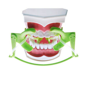 1 X New Sale Dental Retractor Oral Dry Field System Lip Cheek Retractor Green