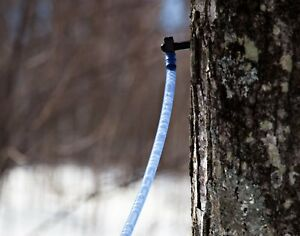 10 Maple Syrup Tree Tapping Kit 10 Taps 2 foot Drop Lines Includes Sap