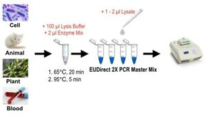 Eudirect Pcr Kits skip dna Extraction Wide Variety Of Samples 240 Reactions