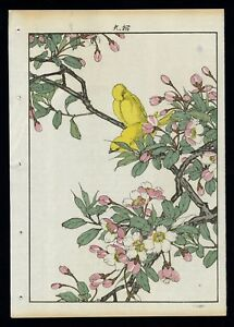 1892 Orig Japanese Woodblock Print Keinen Kacho Gafu Bird Flower Canary