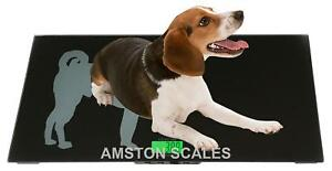 330 X 0 1 Lb 33x16 Digital Scale Small Animal Pet Dog Veterinary Remote Display