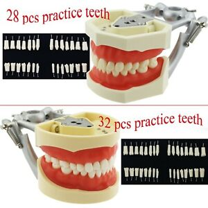 Dental Typodont Teeth Model Kilgore Nissin 200 28 32 Replacement Practice Tooth