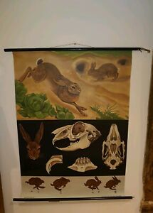 Vintage Linen Educational Chart Of Wild Rabbits By Jung Koch Quentell