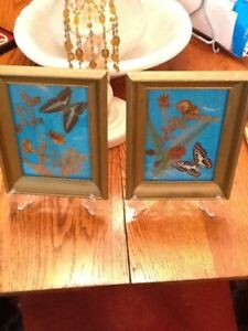 Vintage Pair Dried Flowers Butterfly 9 X7 Gold Weathered Frames W Glass