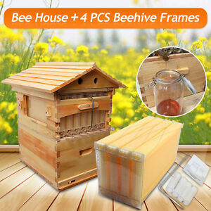 Mini Home Beekeeping Brood Super Box 4 Pcs Beehive Hive Auto Honey Frames