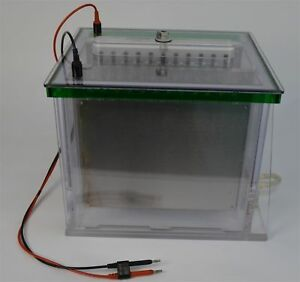 Bio Rad Protean Plus Dodeca Gell Electrophoresis Cell Buffer Recirculation Pump