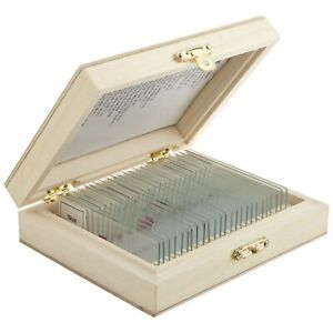 25 Prepared Microscope Slides In Wooden Case High School Level Life Science