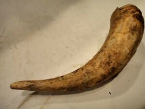 Antique Early Powder Horn