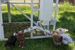 Dci Automatic Chicken Feeder Complete Automatic