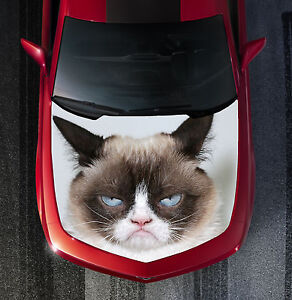 H127 Grumpy Cat Hood Wrap Wraps Decal Sticker Tint Vinyl Image Graphic