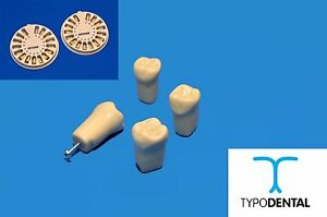 Typodont Teeth Replacement For 860 full Set Compatible With Columbia Brand