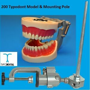 Dental Typodont Model 200 Works With Kilgore Brand Teeth Mounting Pole