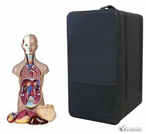 Vision Scientific Vat104 cc0 Sexless Human Torso 11 Parts 50cm With Carrying C