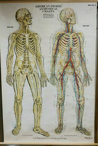 Large 1918 Vintage School Anatomy Chart Nervous Circulatory Wall Map Frohse