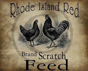 Primitive Country Rhode Island Red Rooster Chicken Scratch Feed Laser Print 8x10