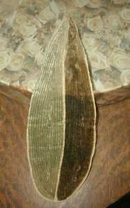 1920s Deco Large Antique French Silk Velvet Millinery Leaf Greens W Tag 10 Long