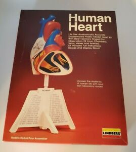 Lindberg Human Heart Life Size Plastic Model Anatomically Accurate 71338
