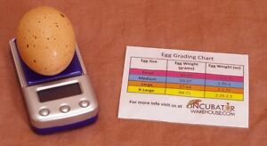 Digital Egg Scale Incubator Scale Measure Humidity Poultry chicken quail duck