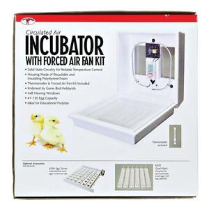 Little Giant Circulated Air Incubator
