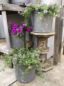 Set 3 Old Rustic Galvanized Maple Sap Syrup Metal Bucket Planter Farm Garden