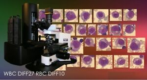 Software For Olympus Microscope Bx45 Bx51 Bx61 Hematology Motorized System