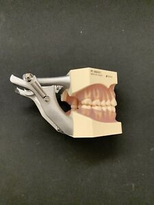 Nissin Kilgore Dental Model With Removable Teeth