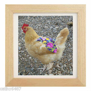 25 Chicken Saddle Apron Hen Jacket Feather Protection Chicken Hatching Eggs Usa