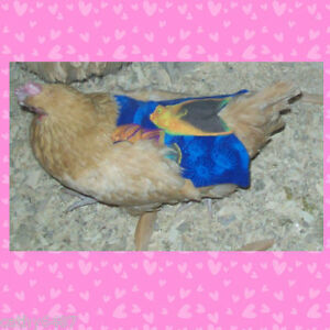 6 Super Wide Long Chicken Saddle Apron Hen Feather Protection Hatching Eggs