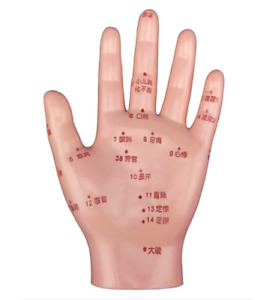 Human Rolling Pressure Massage Points Hand Teaching Education Anatomical Model