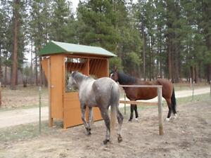 Automated Horse Hay Feeder For Two Horses