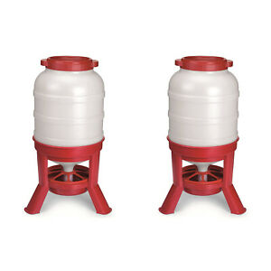 Little Giant 60 Pound Feed Heavy Duty Poultry Chicken Gravity Feeder 2 Pack