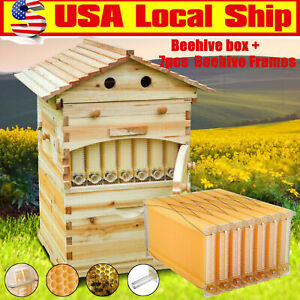 7 Pcs Free Flow Honey Hive Beehive Frames Unique Beehive House Cedarwood Box