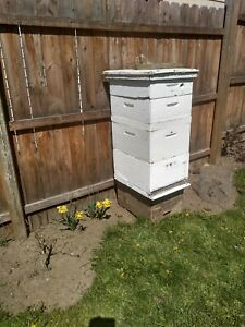 Honey Supers bee Hive With Frames And Foundations
