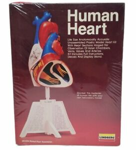 Brand New 1990 Lindburg Human Heart Anatomically Accurate Plastic Model 71338