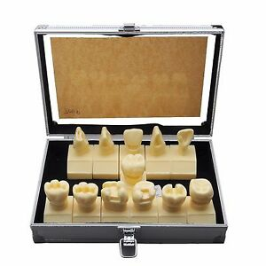Dental Model 7009 01 Cavity Preparation Model