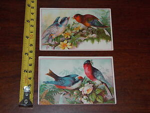 Domestic Paper Patterns Sewing Maching Co Old Advertisment Card Lot Of 2